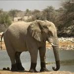 象供養の日
