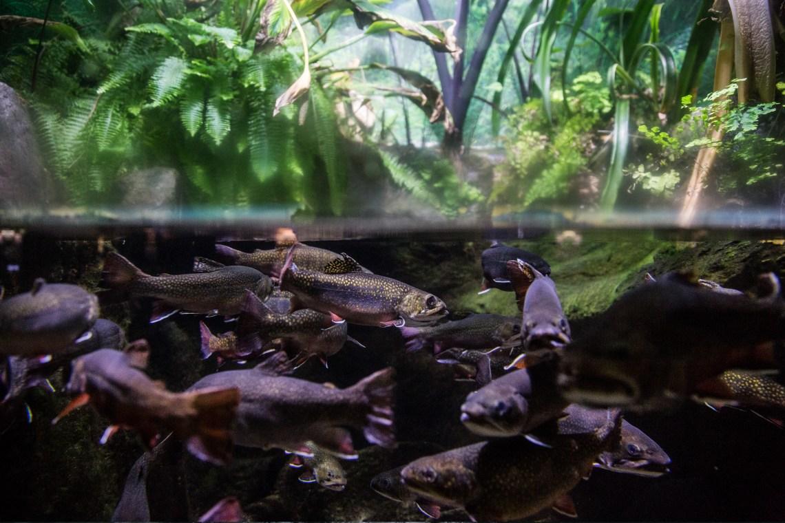 Fishes @ Shedd Aquarium, Chicago