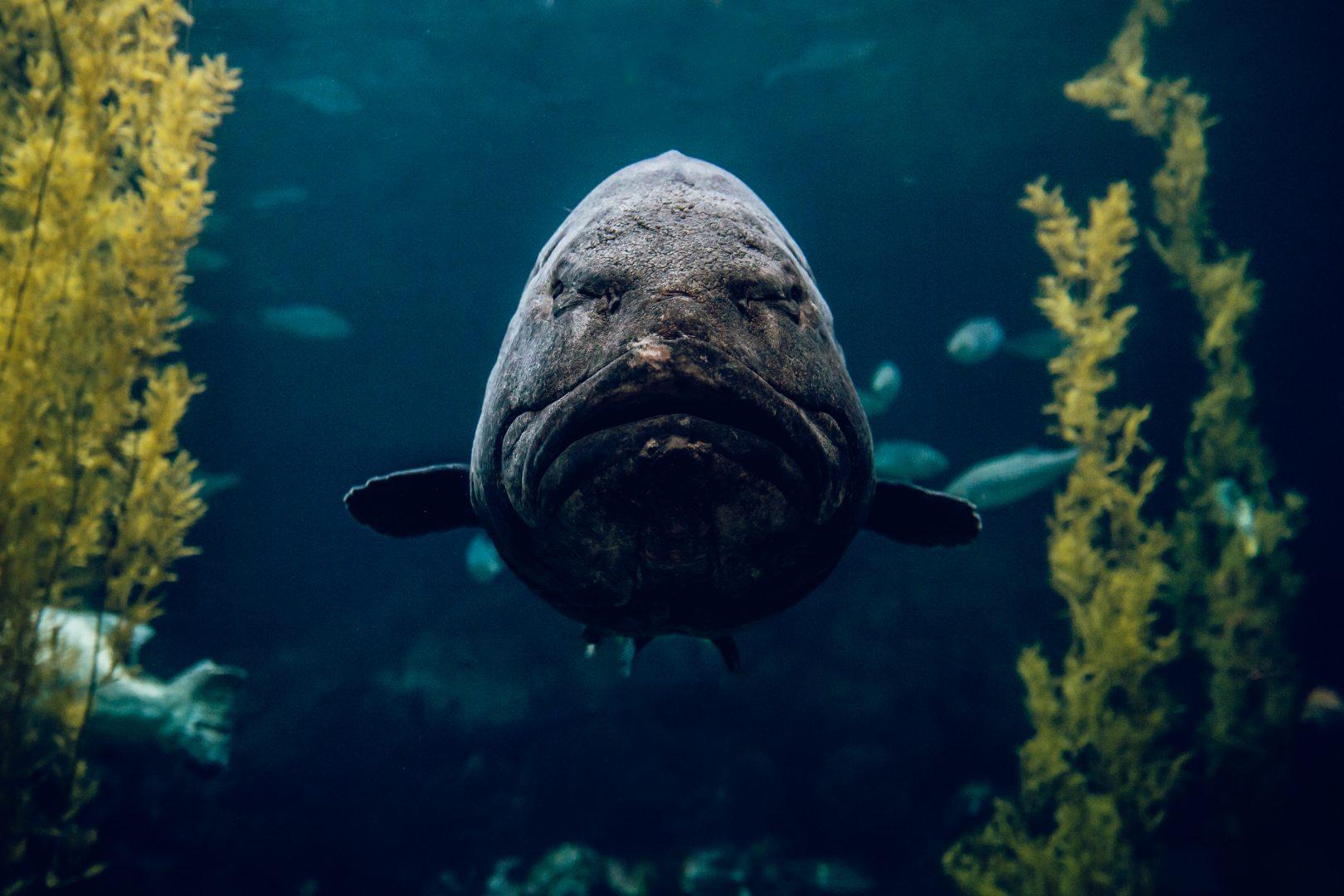 Dude at Monterey Bay Aquarium