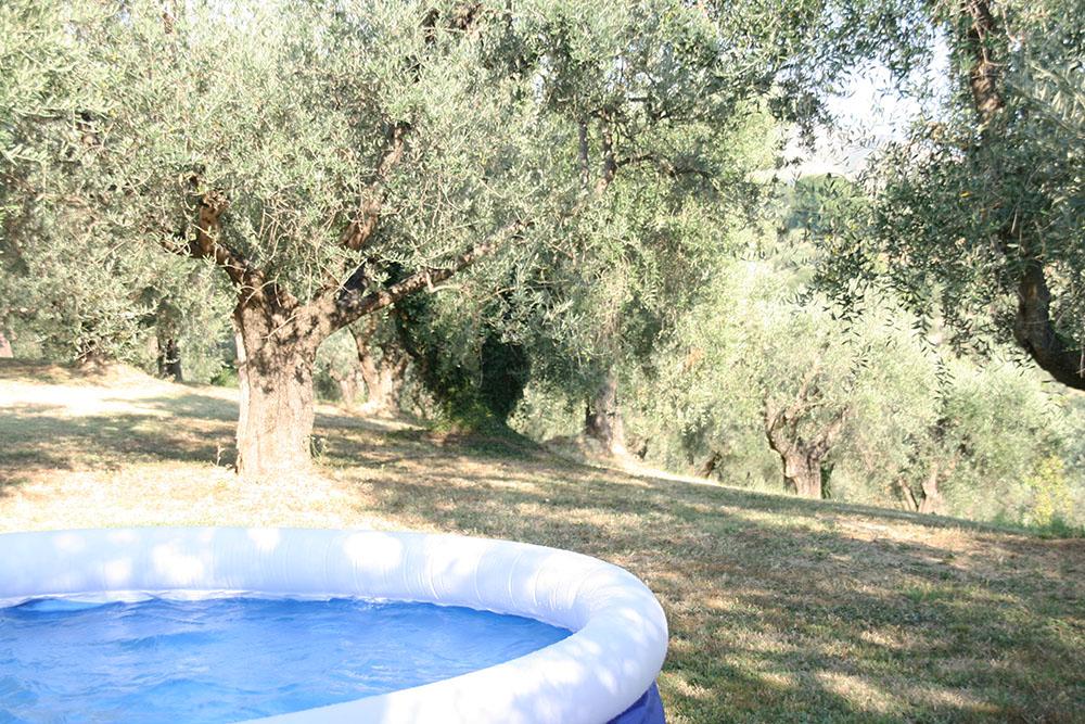 Badebassin imellem alle oliventræerne. Italien