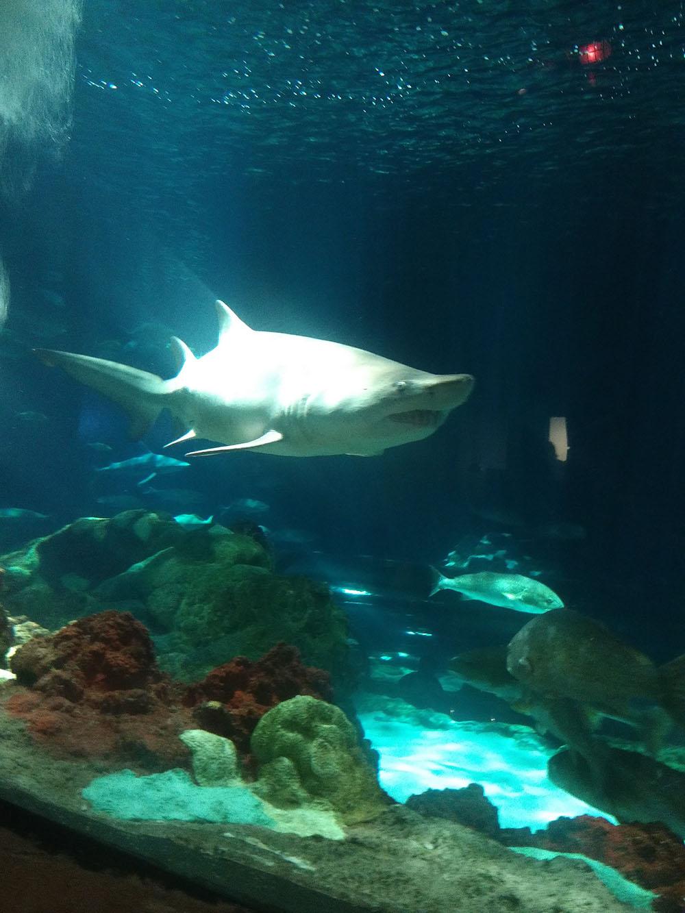 Sharks underwater Grill & Bar - SeaWorld Orlando