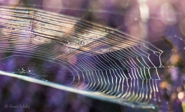 web op de heide