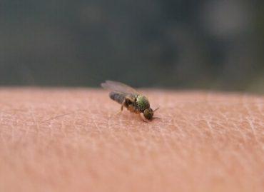 ブヨは、ハエ目カ亜目ブユ科に属する昆虫の総称で、正式には\u201cブユ\u201dと言います。
