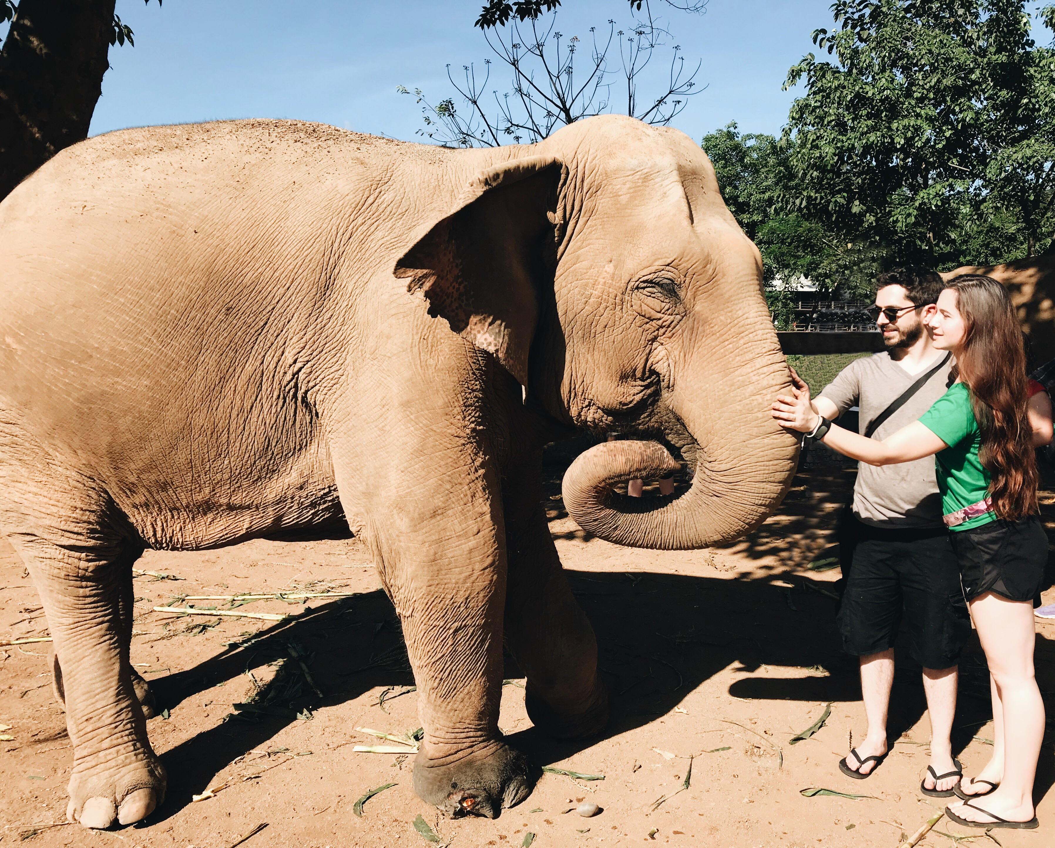 Five Life Lessons I Learned From Elephants