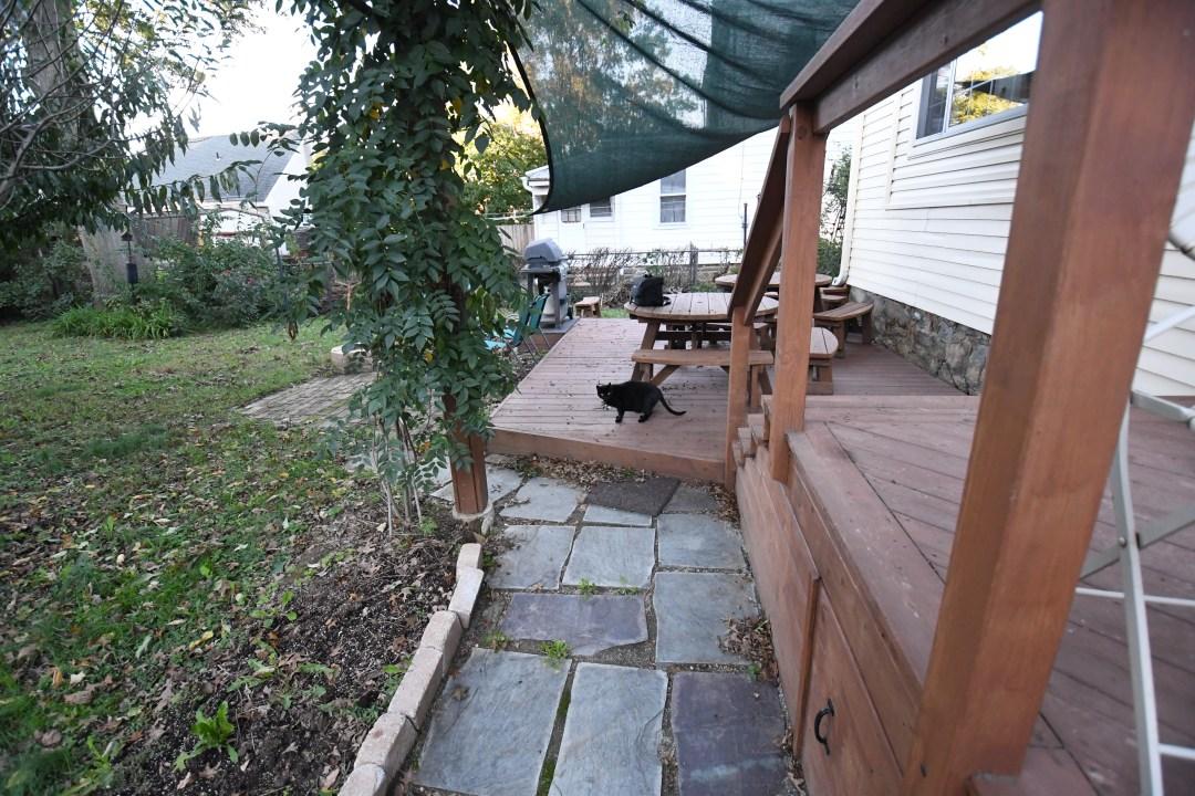 Fox Chase back yard, Inky