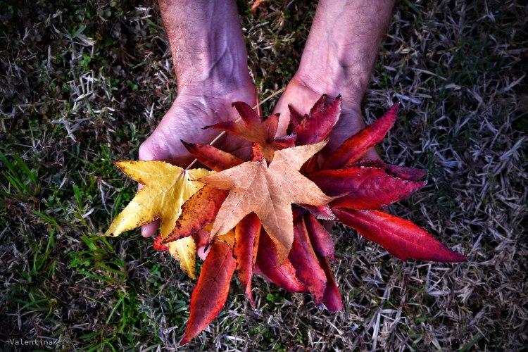 colori e atmosfere d'autunno