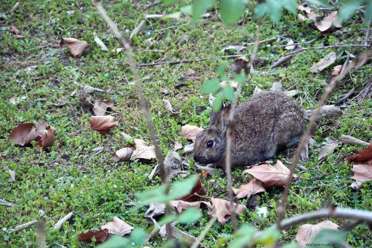 coniglio saltellante al parco bucci di faenza