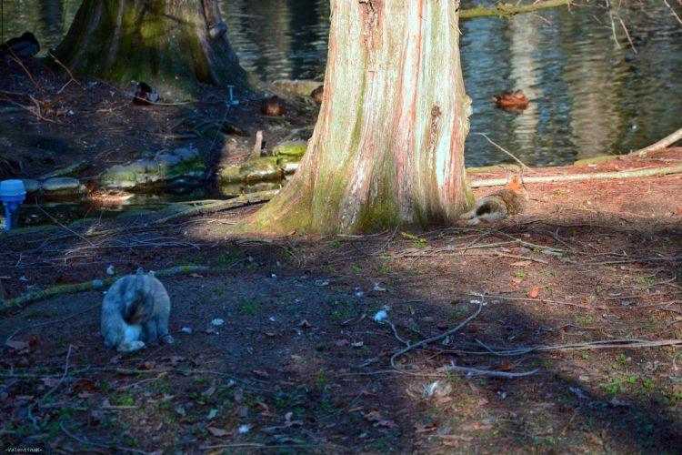 coniglietti e pennuti al sole al parco bucci