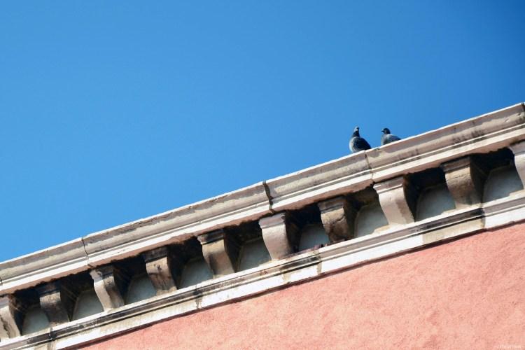 due teneri piccioni coccolosi sui tetti di venezia
