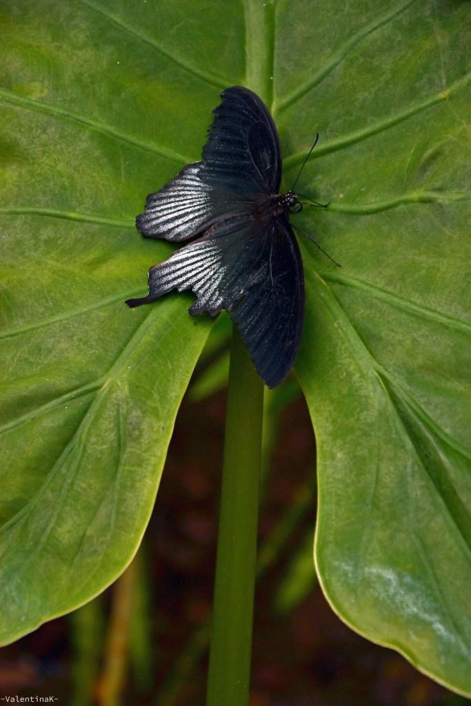 ritratto artistico di farfalla, casa delle farfalle di cervia