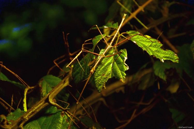 insetti stecco alla casa delle farfalle di cervia