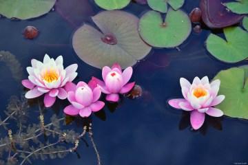 l'arte di accogliere le piccole cose: fiori d'acqua al parco sigurtà