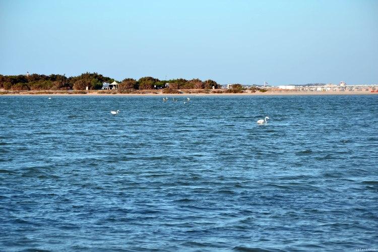 sardegna del sud est spiagge: fenicotteri rosa allo stagno di notteri