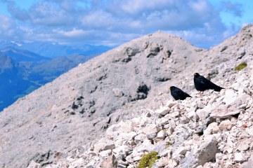 conquistare il sassopiatto: la cima e i gracchi alpini