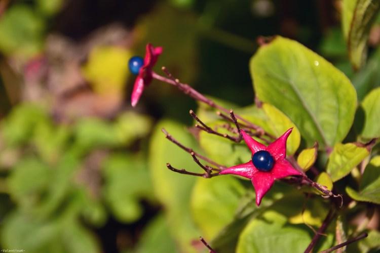 fiori autunnali rosa e blu per celebrare un anno di blog