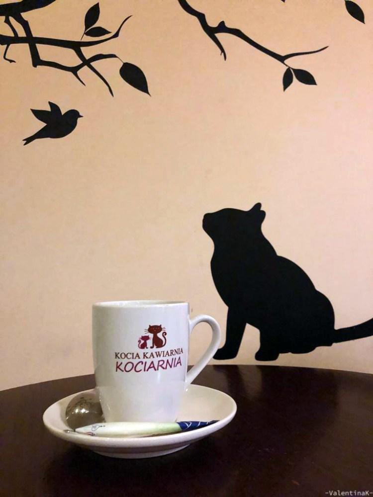 cafè e sale da tè a cracovia: un tè caldo al cat cafè di cracovia