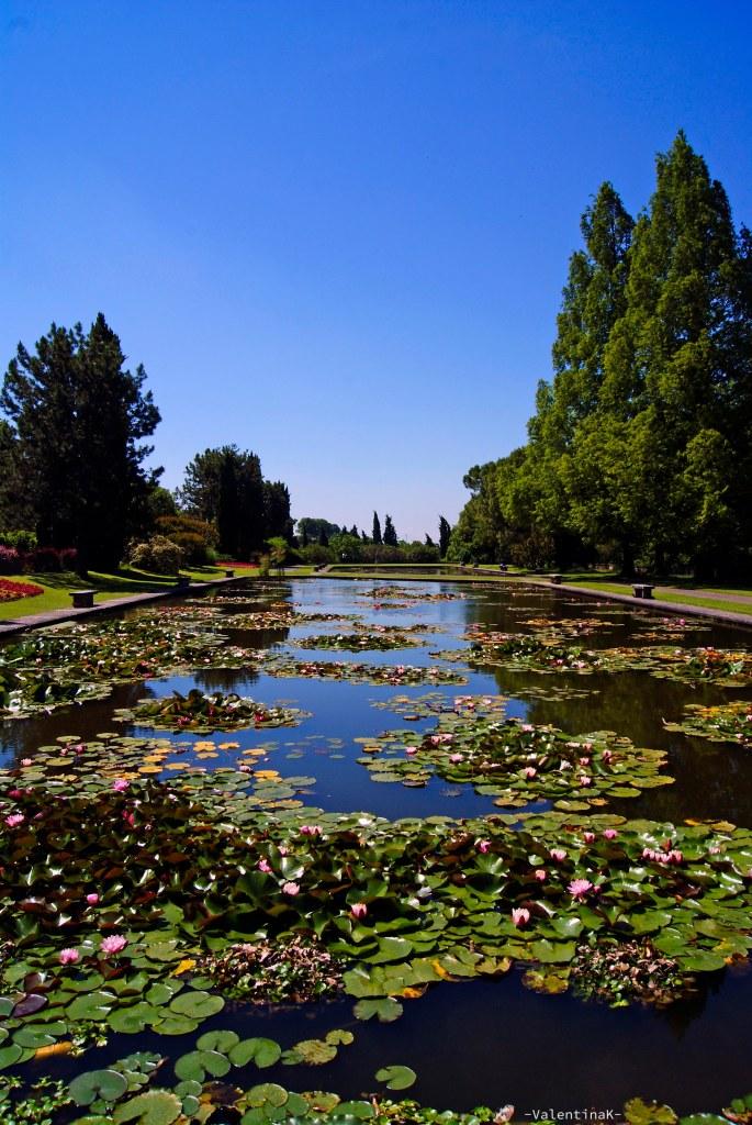 Parco Giardino Sigurtà: i giardini acquatici ricchi di fiori d'acqua