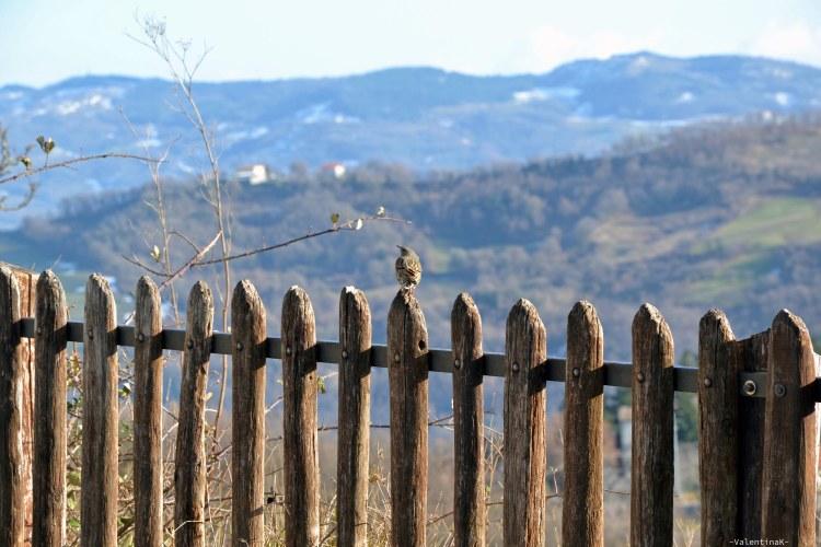ode alla primavera in anticipo: uccellino su staccionata a san leo, in romagna