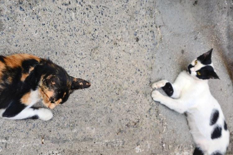gatti pigri a corfù