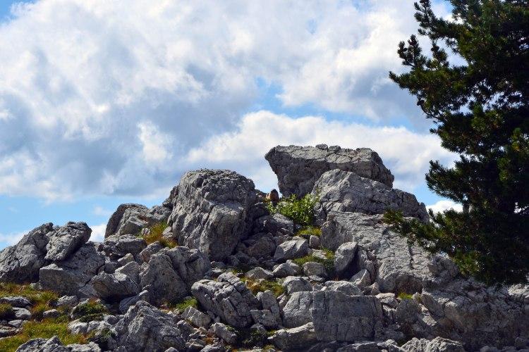 marmotta nascosta tra le rocce