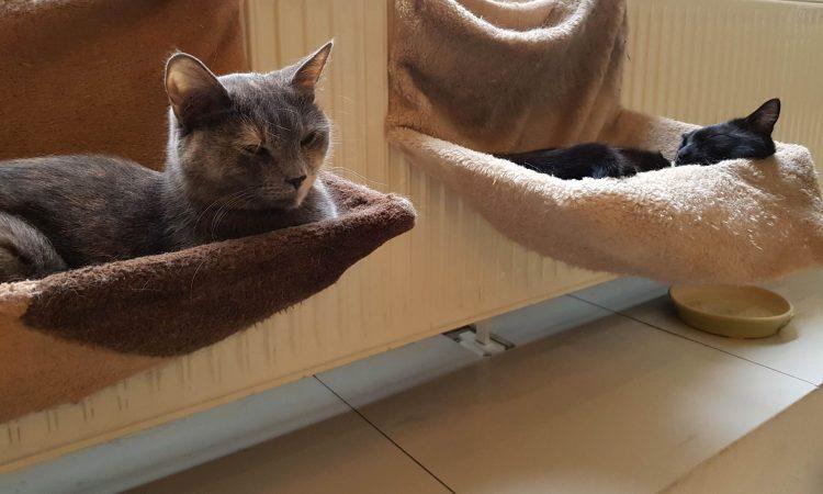 Caffetterie e pasticcerie a Budapest: due esemplari di mici al cat cafè