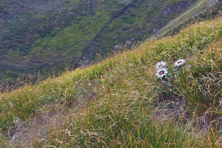 escursione al corno alle scale e al lago scaffaiolo: bellissimi fiori