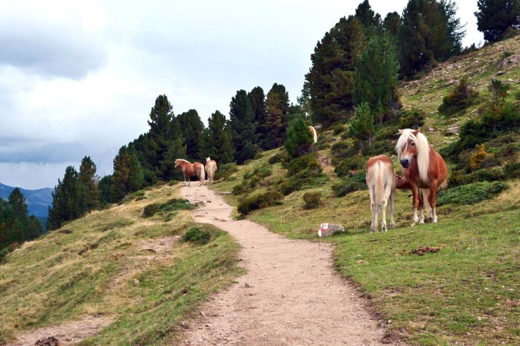 cavalli presso il sentiero per il rifugio brogles