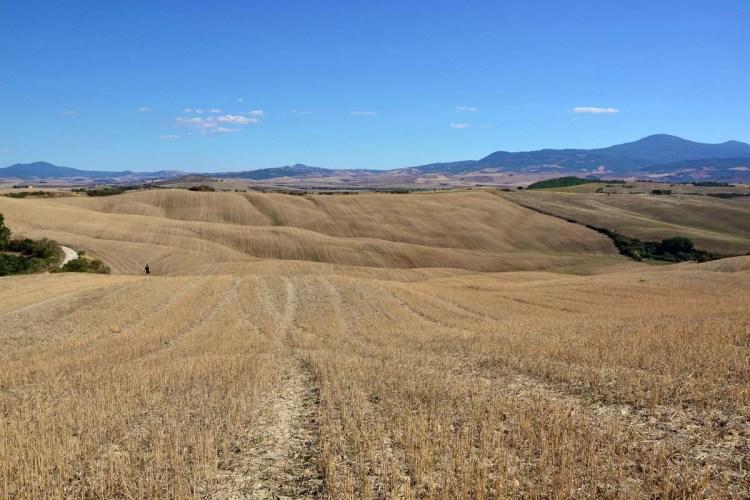 cappella della madonna di vitaleta: i campi di grani nelle colline della Val d'Orcia