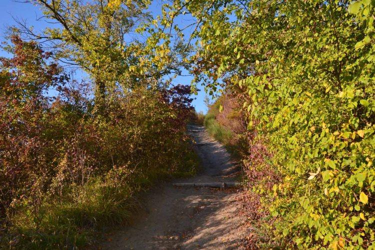 Alla scoperta del Parco Talon: sentiero immerso nella natura