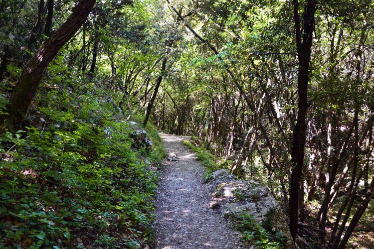 Sentiero Busatte Tempesta: un tratto nel bosco