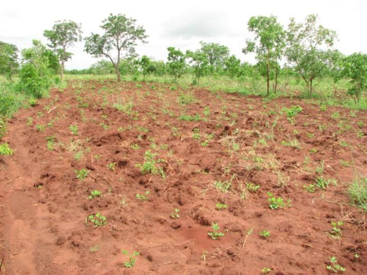 An agroforestry system of 5 hectares is already cultivated