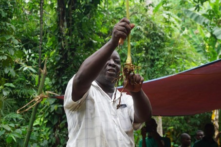 Dr. Mgembe explains the cardamom plant
