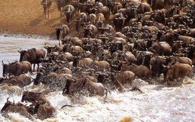 10 Days Great Serengeti Wildebeest Migration Safari