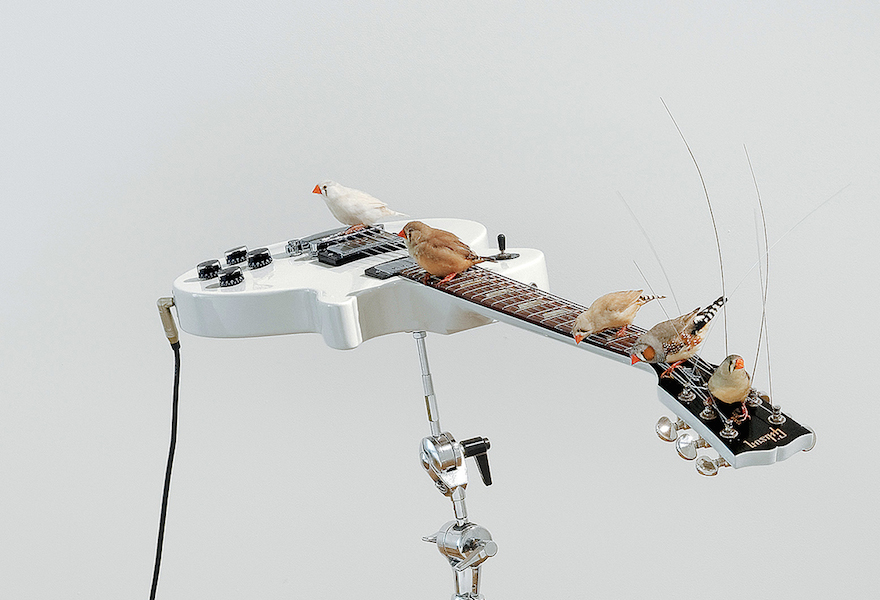 guitarbirds2