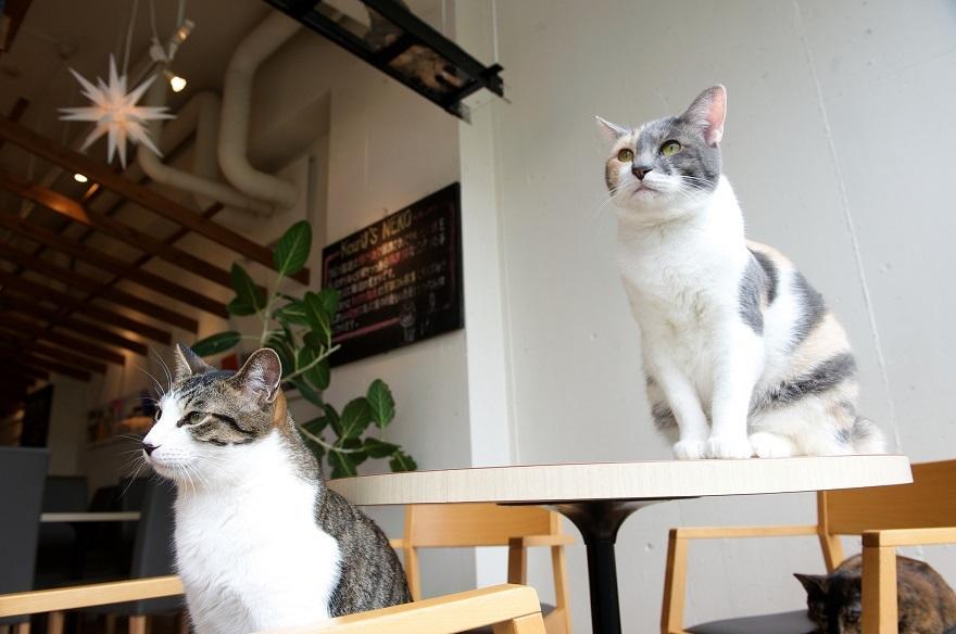 Cat_Cafe_1_melanie_koCreativeCommons2