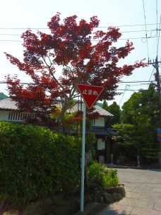 Red leaves in summer