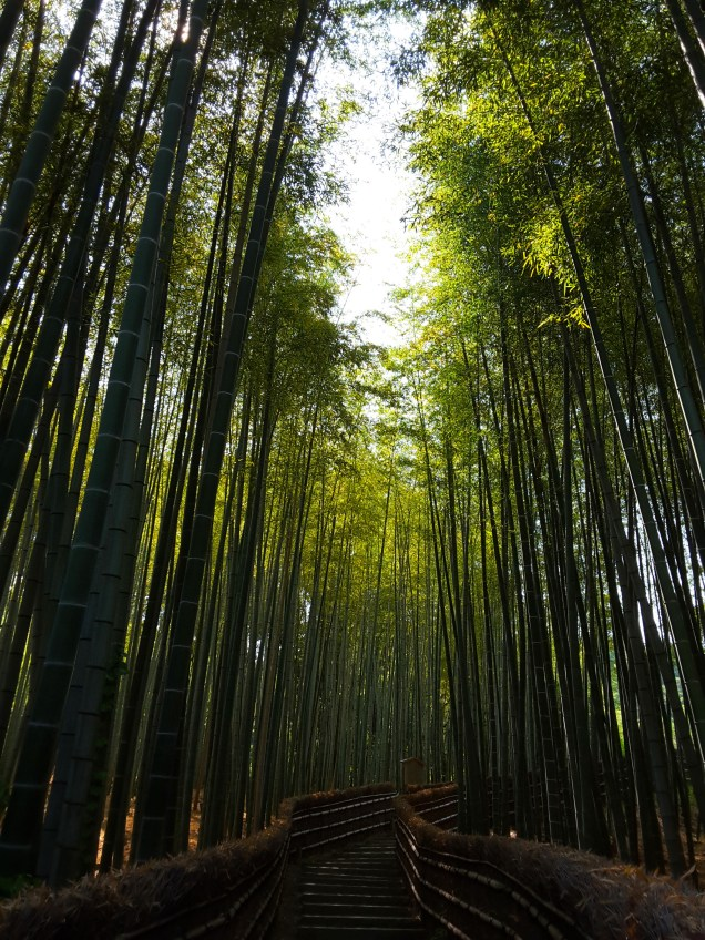Path of bamboos