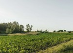 Lucas County Iowa Land For Sale (125)