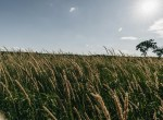 Lucas County Iowa Land For Sale (59)