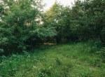 Land for Sale Decatur County Iowa-18