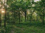 Land for Sale Decatur County Iowa-21