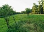 Land for Sale Decatur County Iowa-35
