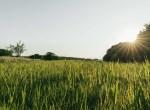 Land for Sale Decatur County Iowa-7