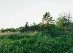 Land for Sale Decatur County Iowa
