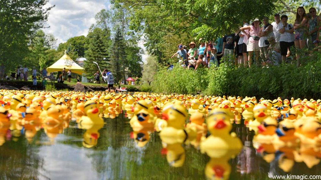 The Great Tay Duck Race, Stewart Park Festival, Perth, Ontario