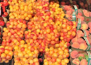 Plums fresh sweet juicy, display at the St. Jacobs Farmers Market