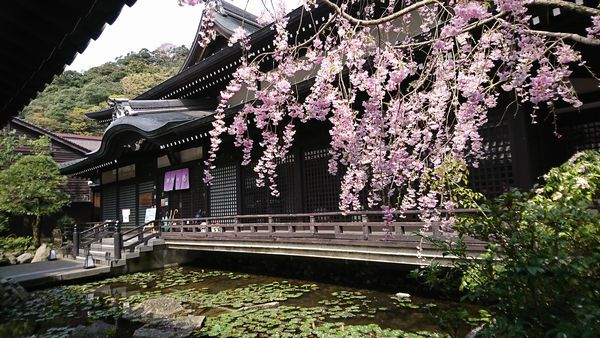 城崎温泉外湯 御所の湯 桜と蓮の花の饗宴