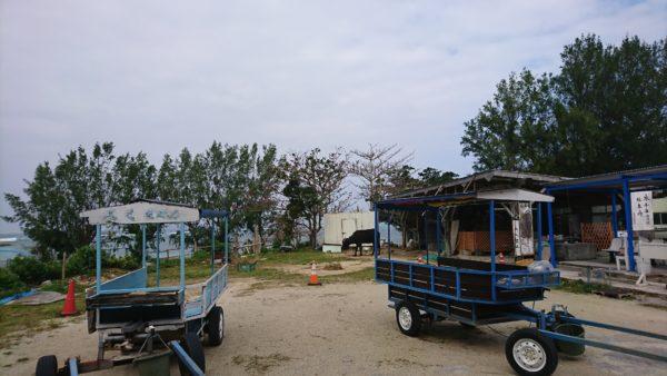 フクギ並木の水牛車