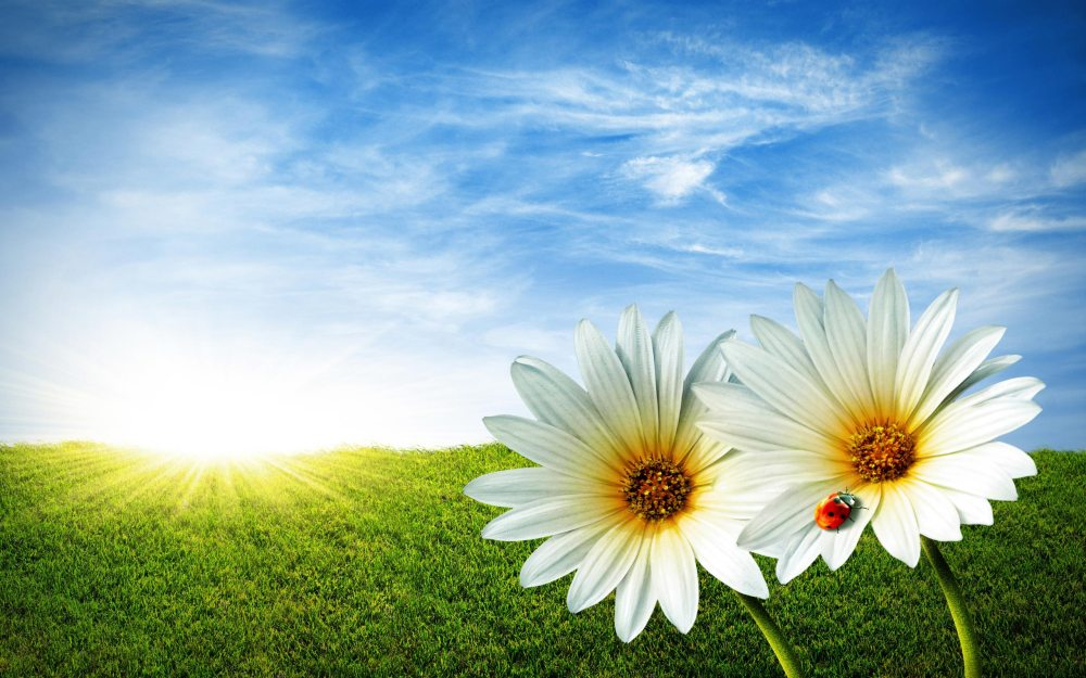 Spring Equinox - Energy Whispers (2/5)
