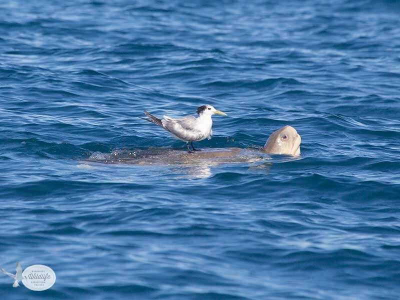23 July 2013 – Whales, birds and dolphins